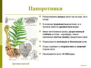 Папоротники Распространены везде, растут как на суше, так и в воде В основном