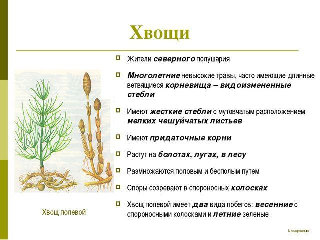 Хвощи Жители северного полушария Многолетние невысокие травы, часто имеющие д...