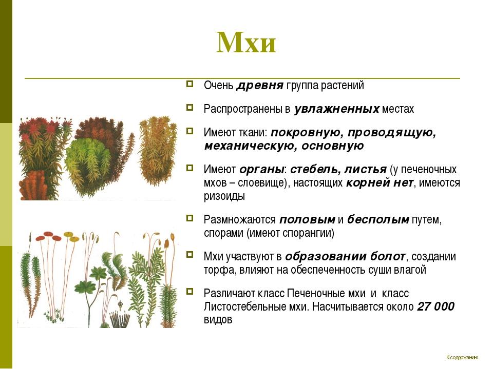 Мхи Очень древня группа растений Распространены в увлажненных местах Имеют тк...