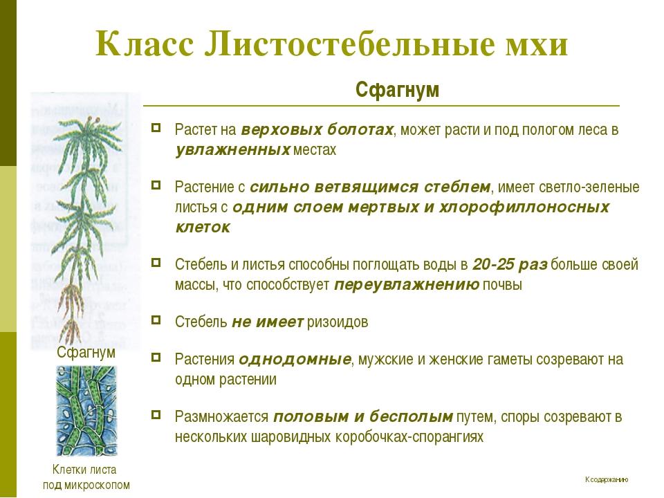 Класс Листостебельные мхи Сфагнум Растет на верховых болотах, может расти и п...