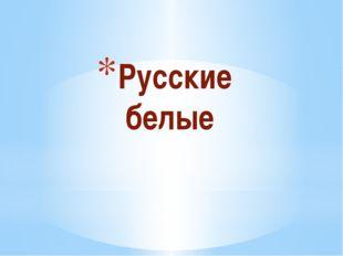 Русские белые