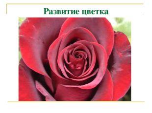 Развитие цветка
