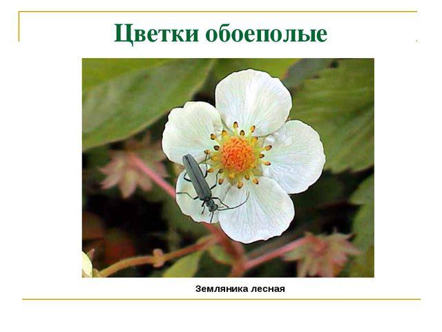 Цветки обоеполые Земляника лесная