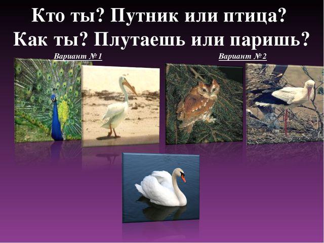 Кто ты? Путник или птица? Как ты? Плутаешь или паришь? Вариант № 1 Вариант № 2