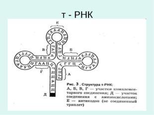 т - РНК
