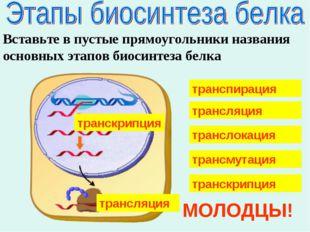 Вставьте в пустые прямоугольники названия основных этапов биосинтеза белка тр
