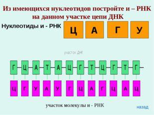 Из имеющихся нуклеотидов постройте и – РНК на данном участке цепи ДНК Нуклеот