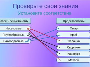 Проверьте свои знания Установите соответствие Класс Членистоногих Представите