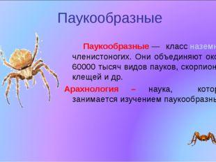Паукообразные Паукообразные— классназемных членистоногих. Они объединяют ок