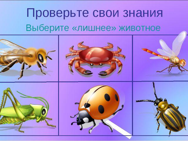 Проверьте свои знания Выберите «лишнее» животное