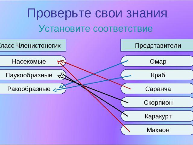 Проверьте свои знания Установите соответствие Класс Членистоногих Представите...
