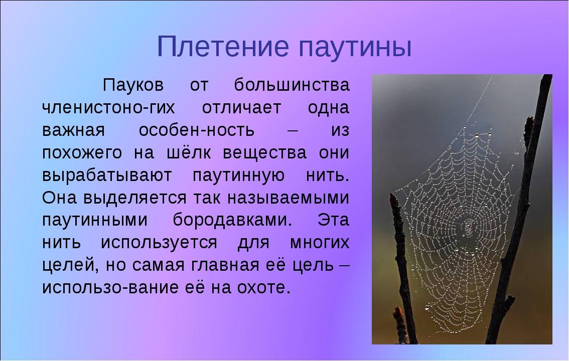 Плетение паутины Пауков от большинства членистоно-гих отличает одна важная ос...