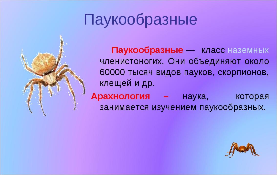 Паукообразные Паукообразные— классназемных членистоногих. Они объединяют ок...