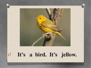 It's a bird. It's jellow.