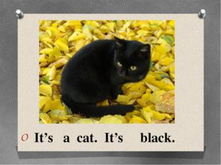 It's a cat. It's black.
