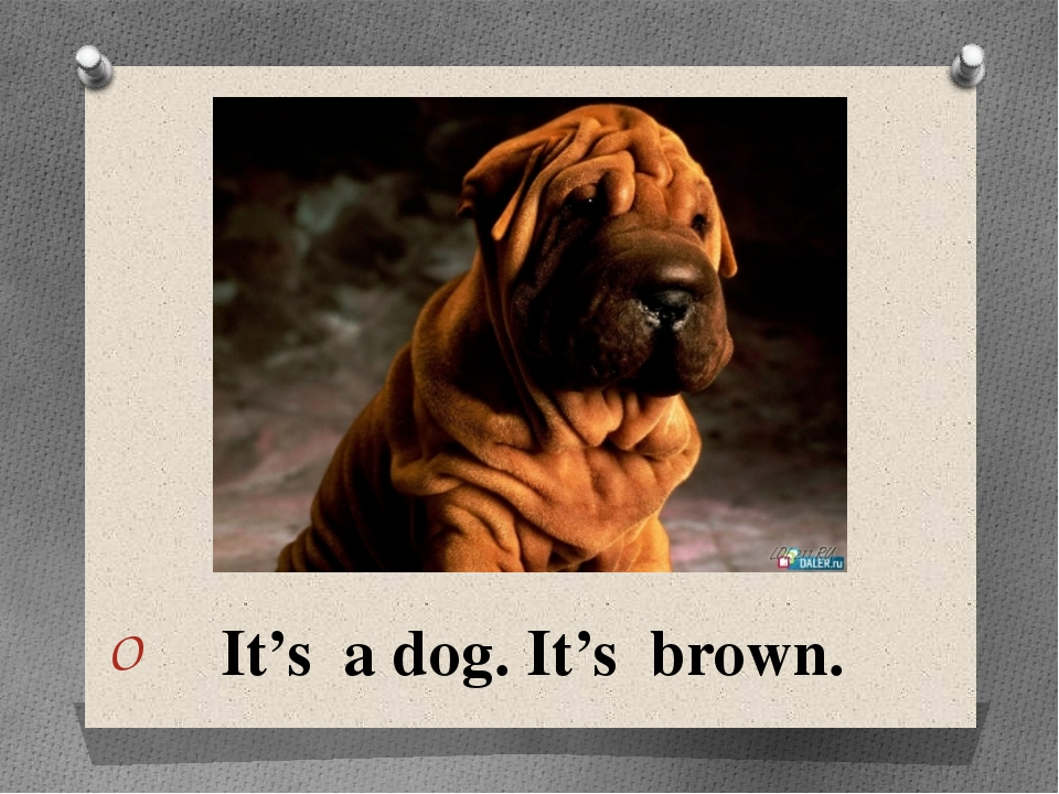 It's a dog. It's brown.