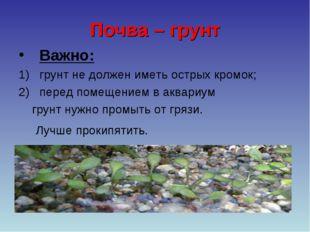 Почва – грунт Важно: грунт не должен иметь острых кромок; перед помещением в