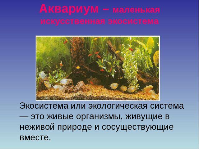 Аквариум – маленькая искусственная экосистема Экосистема или экологическая си...