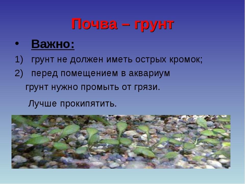 Почва – грунт Важно: грунт не должен иметь острых кромок; перед помещением в...