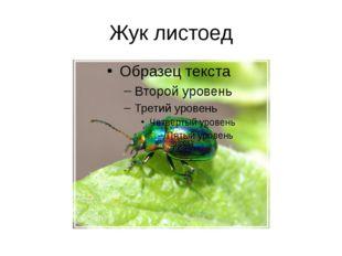 Жук листоед