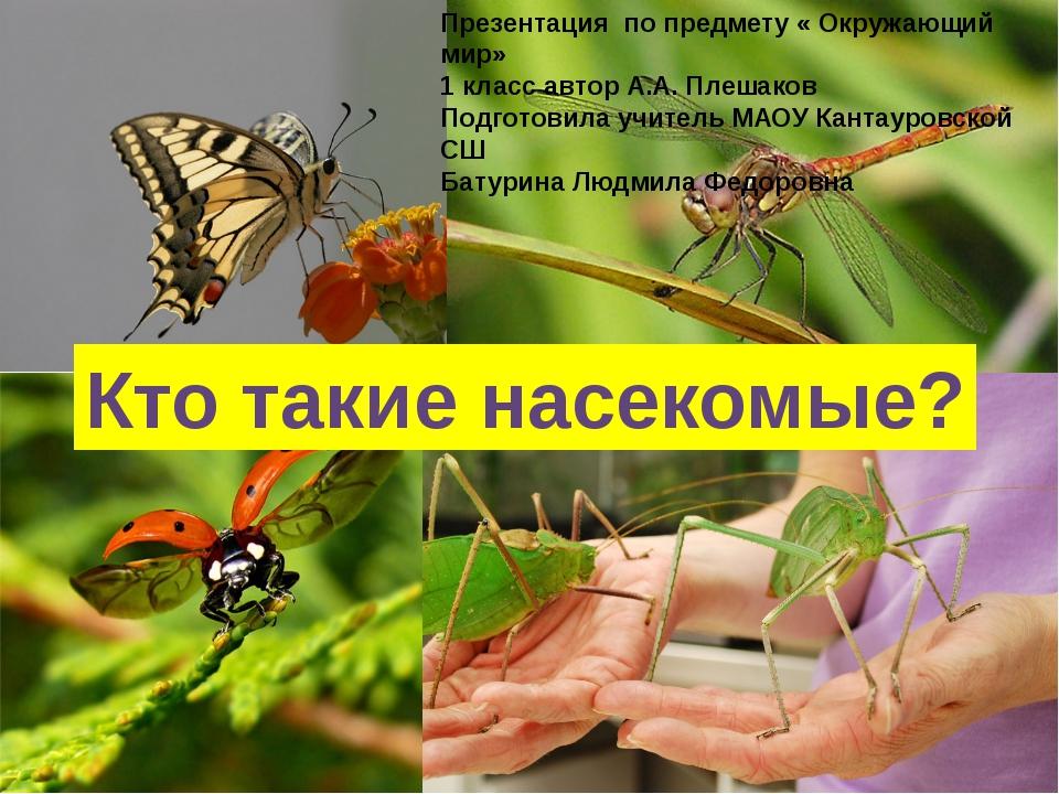 Кто такие насекомые? Кто такие насекомые? Презентация по предмету « Окружающи...