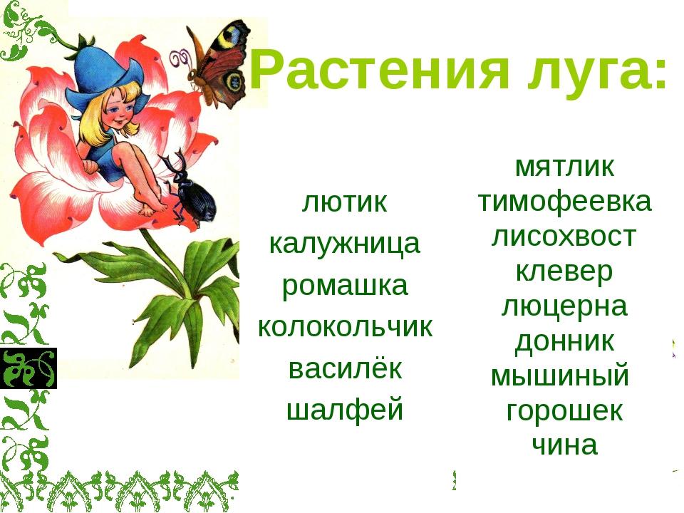 Растения луга: лютик калужница ромашка колокольчик василёк шалфей мятлик тимо...