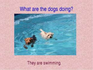What are the dogs doing? They are swimming.