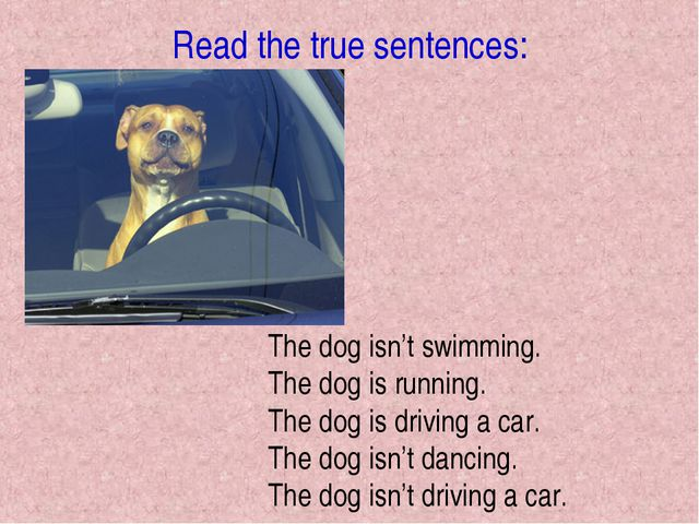 Read the true sentences: The dog isn't swimming. The dog is running. The dog...