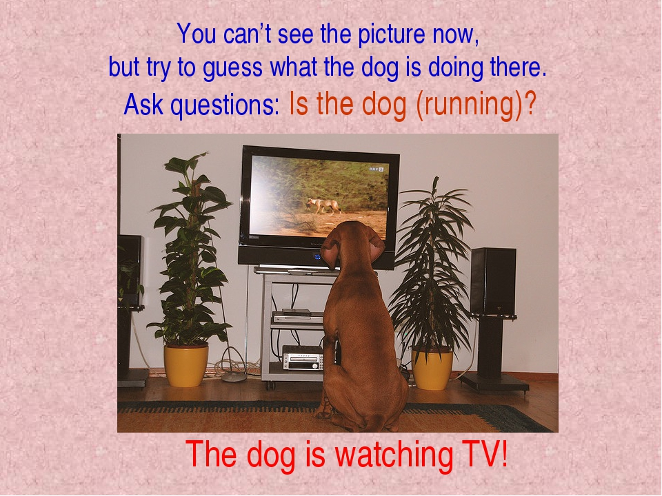You can't see the picture now, but try to guess what the dog is doing there....