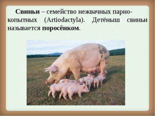 Свиньи – семействонежвачныхпарно- копытных (Artiodactyla). Детёныш свиньи
