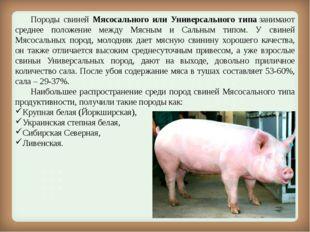 Породы свиней Мясосального или Универсального типазанимают среднее положен