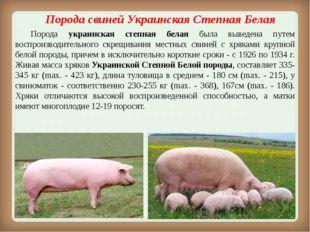 Порода свинейУкраинская Степная Белая Порода украинская степная белая была
