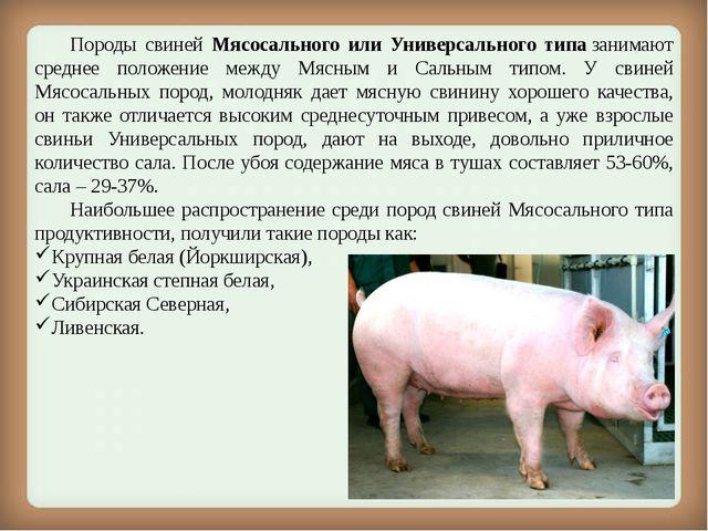 Породы свиней Мясосального или Универсального типазанимают среднее положен...