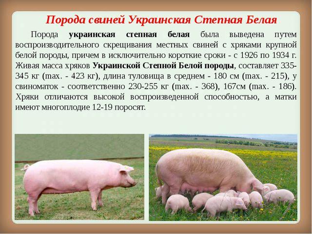 Порода свинейУкраинская Степная Белая Порода украинская степная белая была...