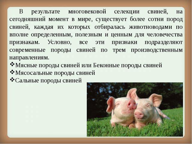 В результате многовековой селекции свиней, на сегодняшний момент в мире, су...