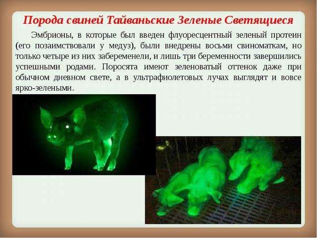 Порода свинейТайваньские Зеленые Светящиеся Эмбрионы, в которые был введен...