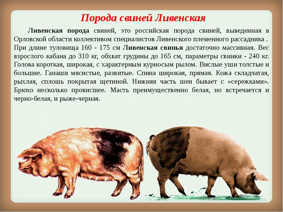 Порода свинейЛивенская Ливенская порода свиней, это российская порода свин...