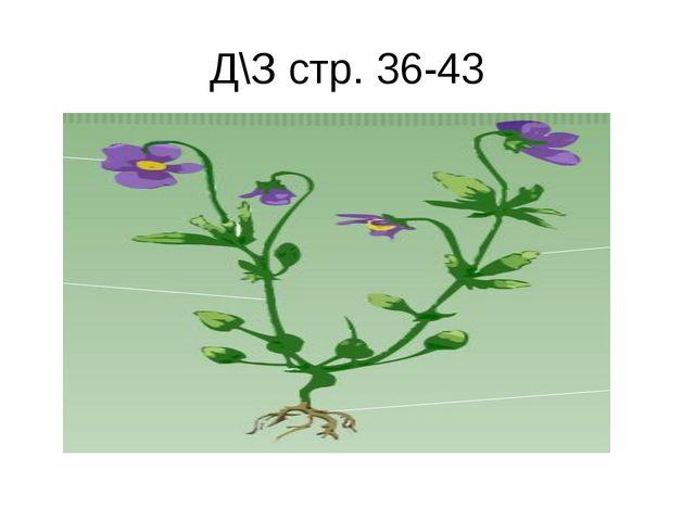 Д\З стр. 36-43