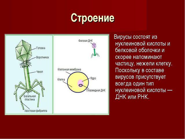 Строение Вирусы состоят из нуклеиновой кислоты и белковой оболочки и скорее н...