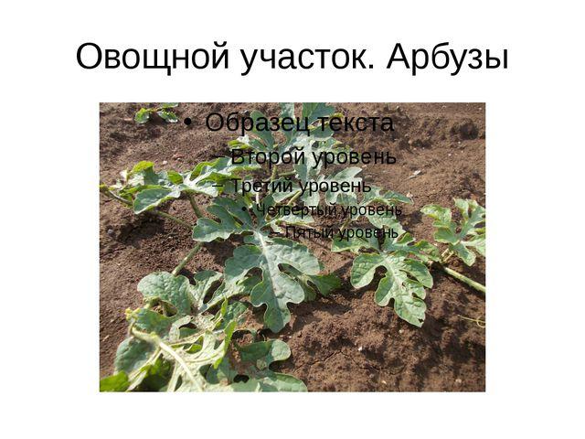 Овощной участок. Арбузы