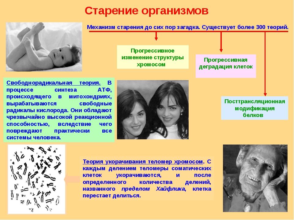 С чем связан процесс старения организма
