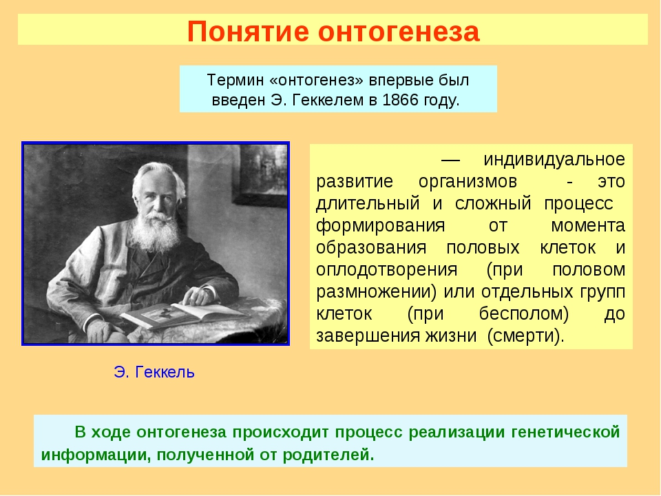 Понятие онтогенеза Онтогене́з — индивидуальное развитие организмов - это длит...