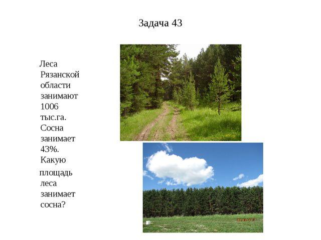 Задача 43 Леса Рязанской области занимают 1006 тыс.га. Сосна занимает 43%. Ка...