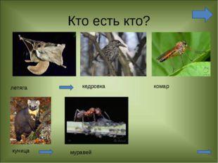 Кто есть кто? летяга кедровка комар куница муравей