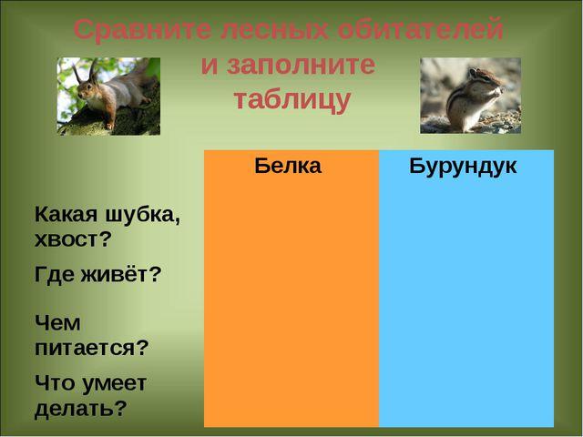 Сравните лесных обитателей и заполните таблицу Белка Бурундук Какая шубка,...