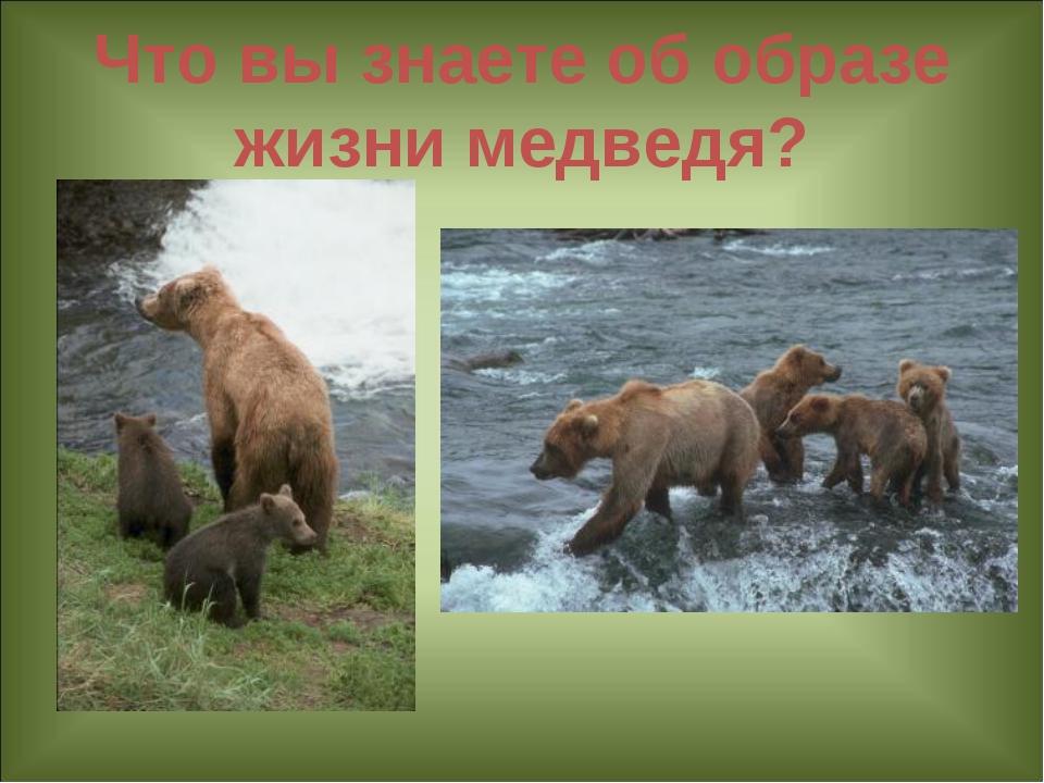 Что вы знаете об образе жизни медведя?
