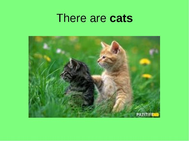 There are cats