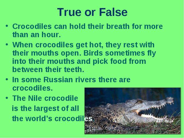 True or False Crocodiles can hold their breath for more than an hour. When cr...