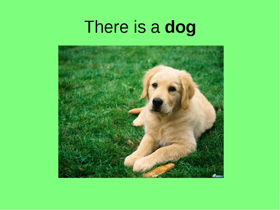 There is a dog