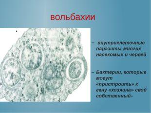 вольбахии внутриклеточные паразиты многих насекомых и червей Бактерии, которы